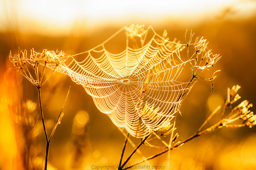 Web in Sun by Anssi  karilahti on 500px.com