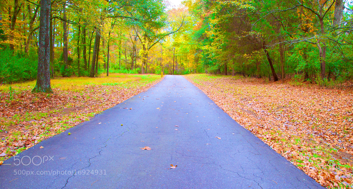 Photograph Road to Nature! by Thiru Moorthy on 500px
