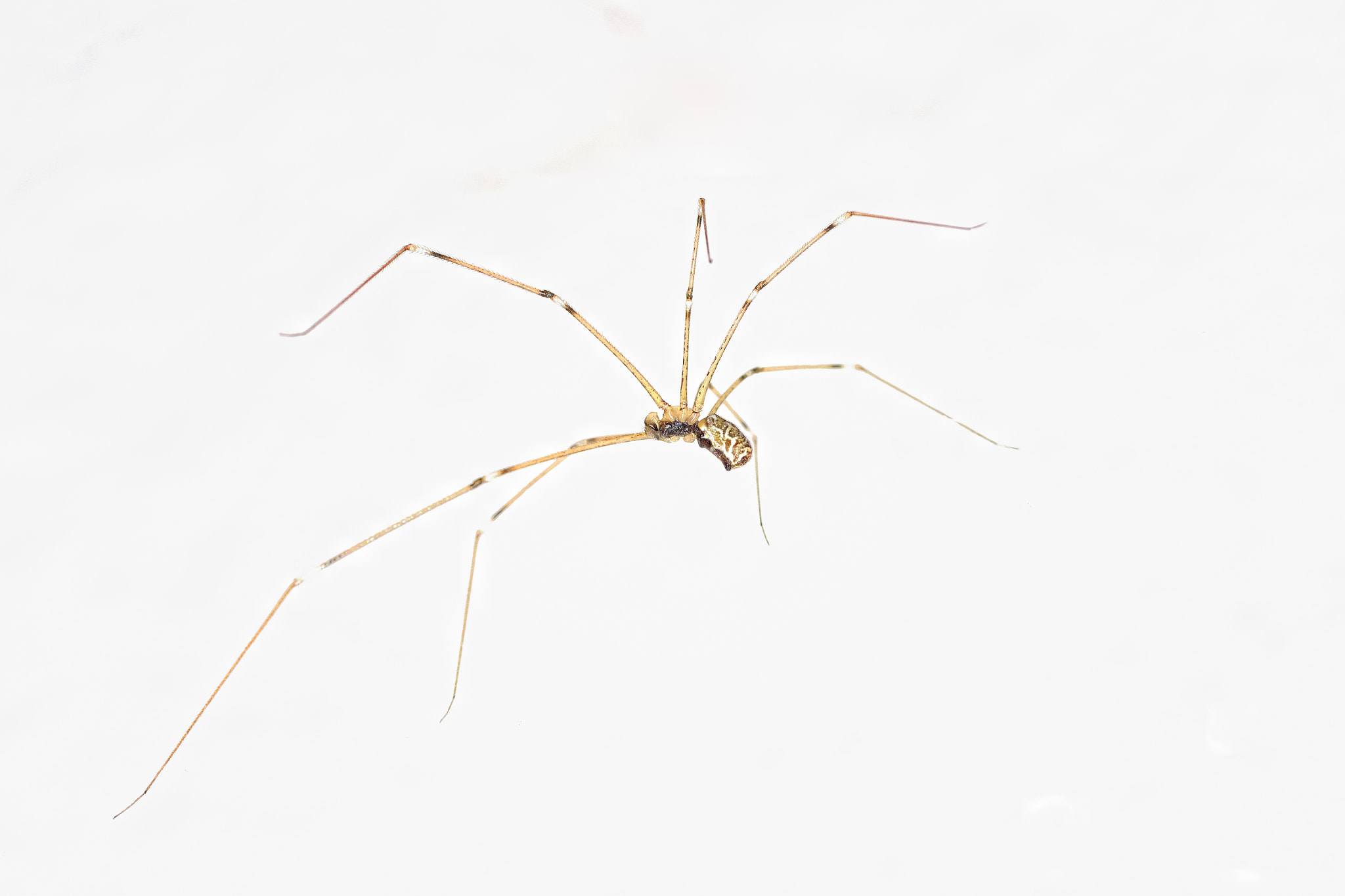 Photograph Spider, high key by Pilar Bau on 500px
