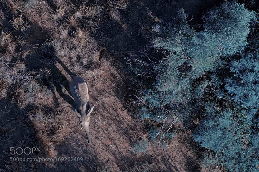 Flying over an Elephant  Shot on Fujifilm X-T2 More photos in the article I wrote for...
