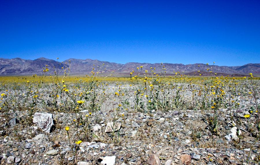 Desert and flowers