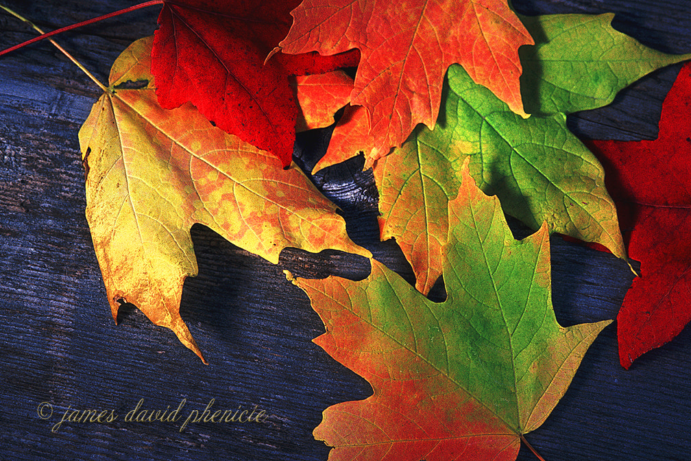 Photograph Fall Colors by James David Phenicie on 500px
