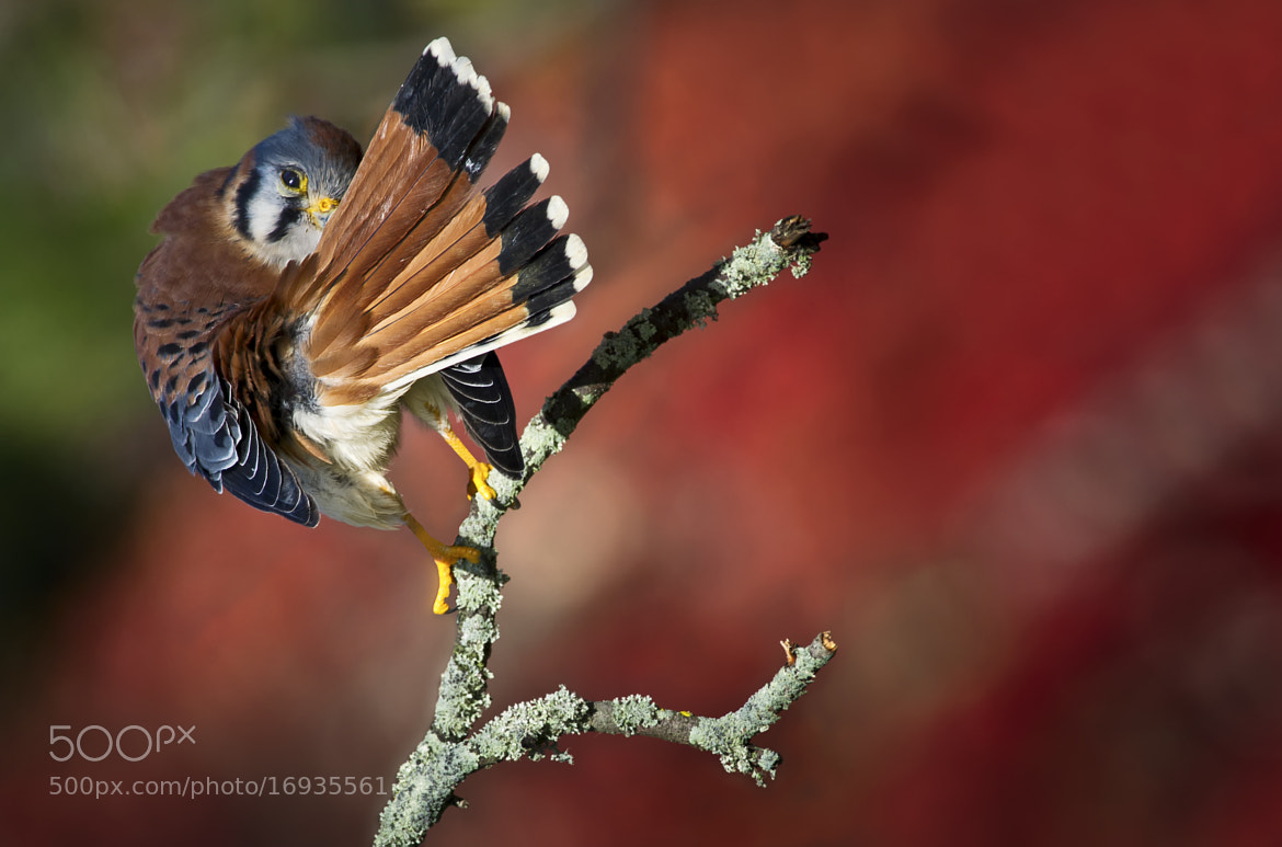 Photograph Simply shy by Alessandro Cancian on 500px
