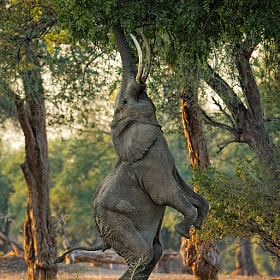 Heartwarming Elephant Photography
