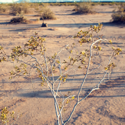 Desert Bush, Canon EOS DIGITAL REBEL XTI, Canon EF 28-80mm f/2.8-4L