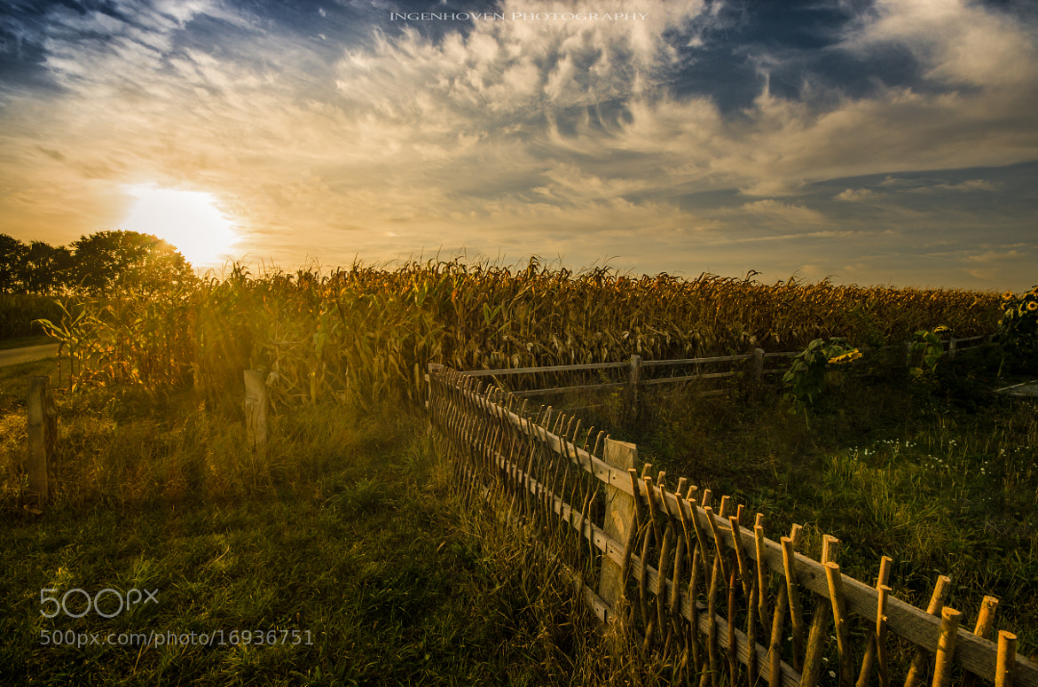 Photograph Maisfeld by ingenhoven photography on 500px