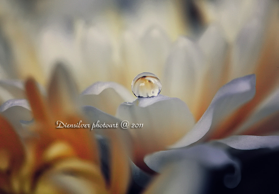 Photograph White Elegant by Diens Silver on 500px
