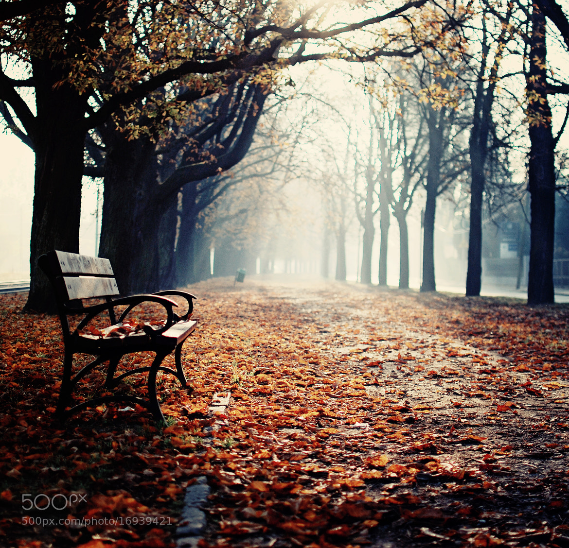 Photograph Just a bench by Erik Witsoe on 500px