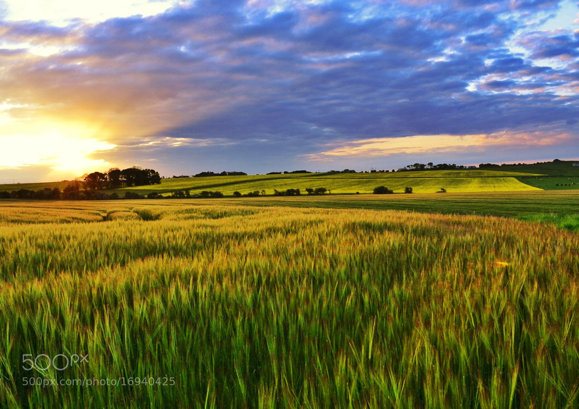 Photograph Fields of Fire  by Sarah johnson on 500px