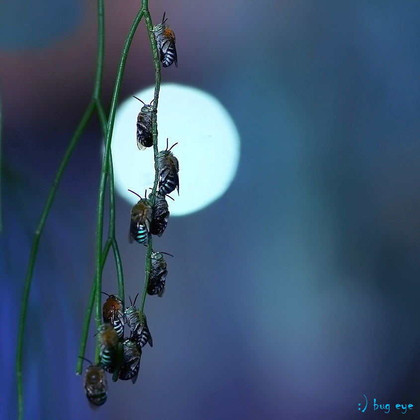 Photograph ~ sleeping time ~ by bug eye :) on 500px