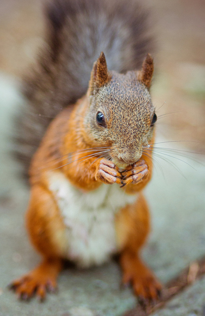 Photograph amusing squirrel by Polina Tulyakova on 500px