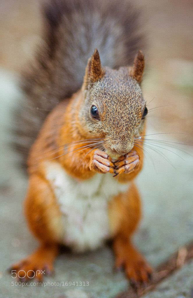 Photograph amusing squirrel by Polina Gribanova on 500px