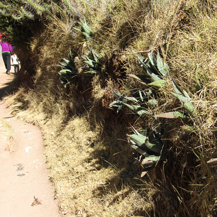 Walking from Sacsayhuam n, Canon POWERSHOT SX420 IS