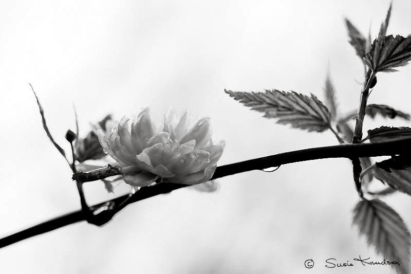 Photograph Delicate by Susie Knudsen on 500px