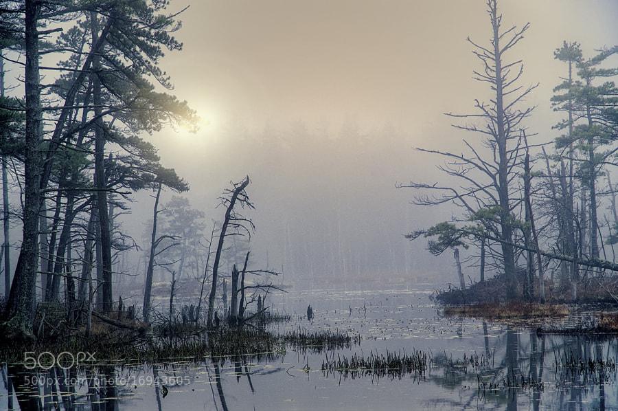 Taken in Reid State Park in Maine.