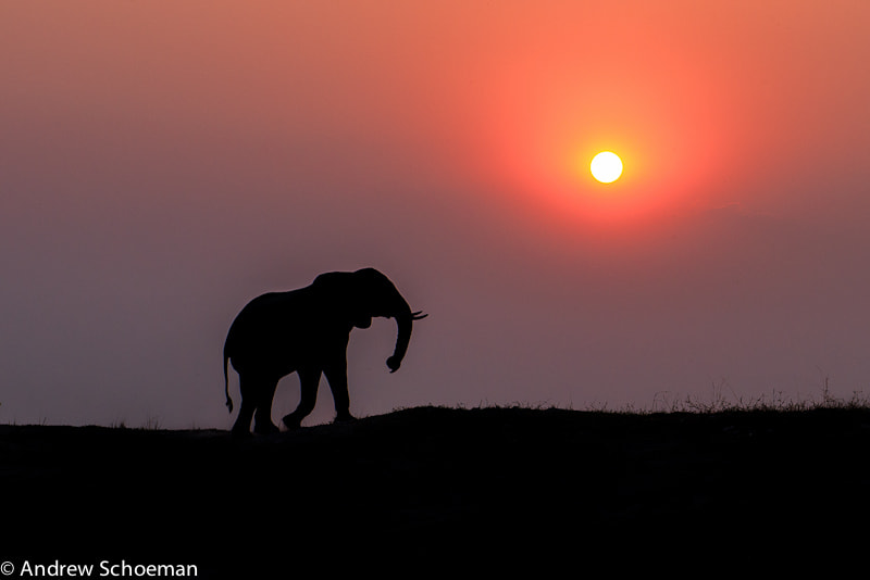 Photograph Ellie Silhouette by Andrew Schoeman on 500px