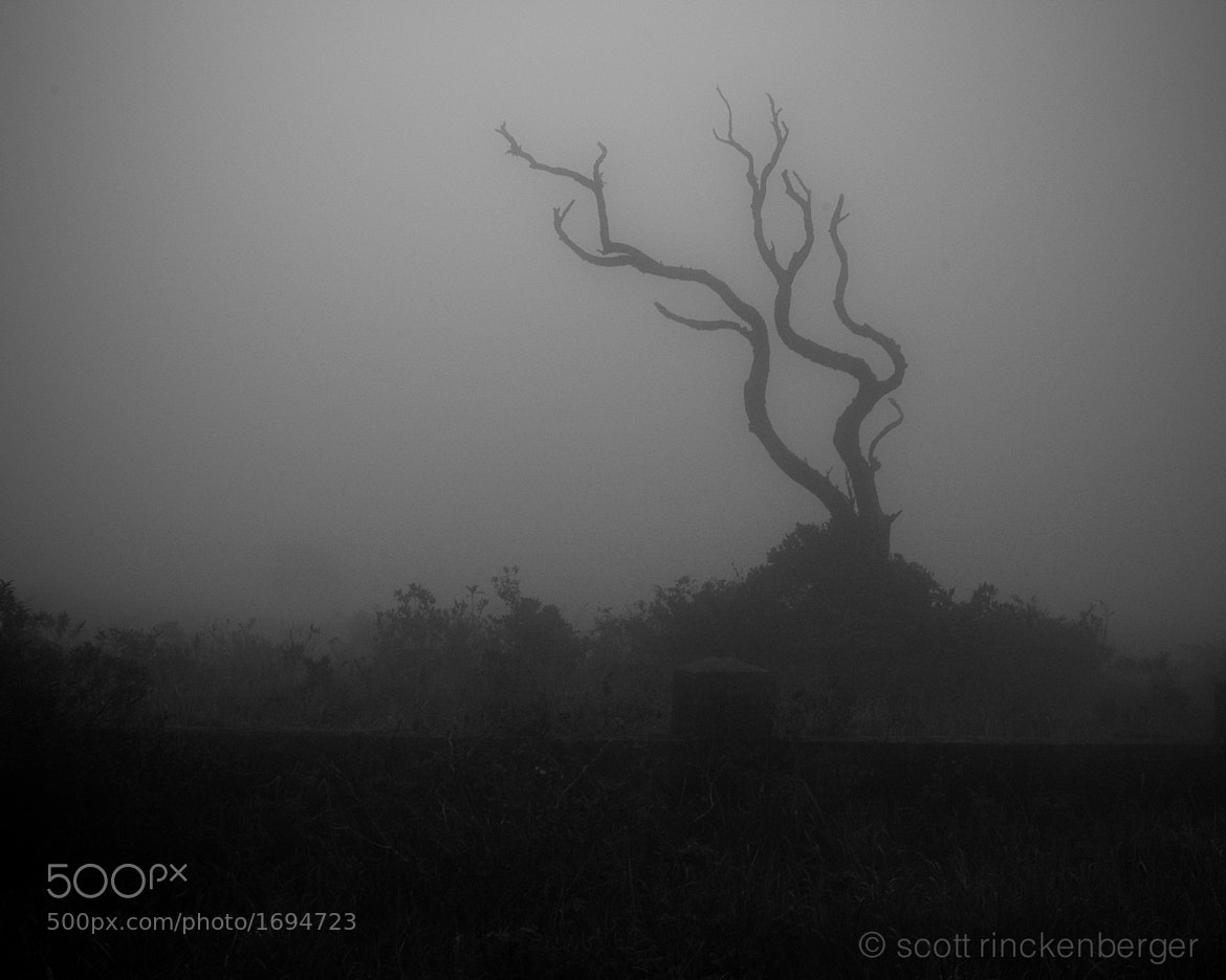 Photograph Snag in fog at Bokor Hill. by Scott  Rinckenberger on 500px