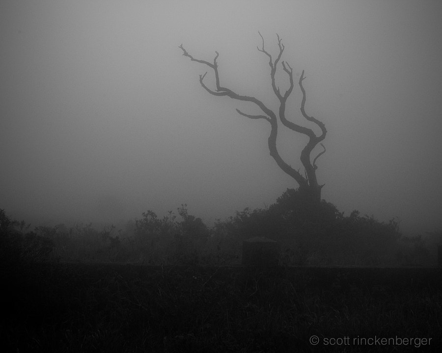 Snag in the fog.  Bokor Hill Station, central Cambodia.