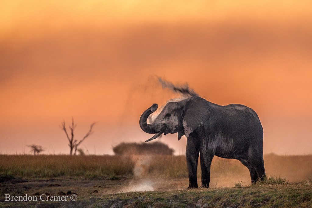 Photograph Elephant Dust Bath by Brendon Cremer on 500px