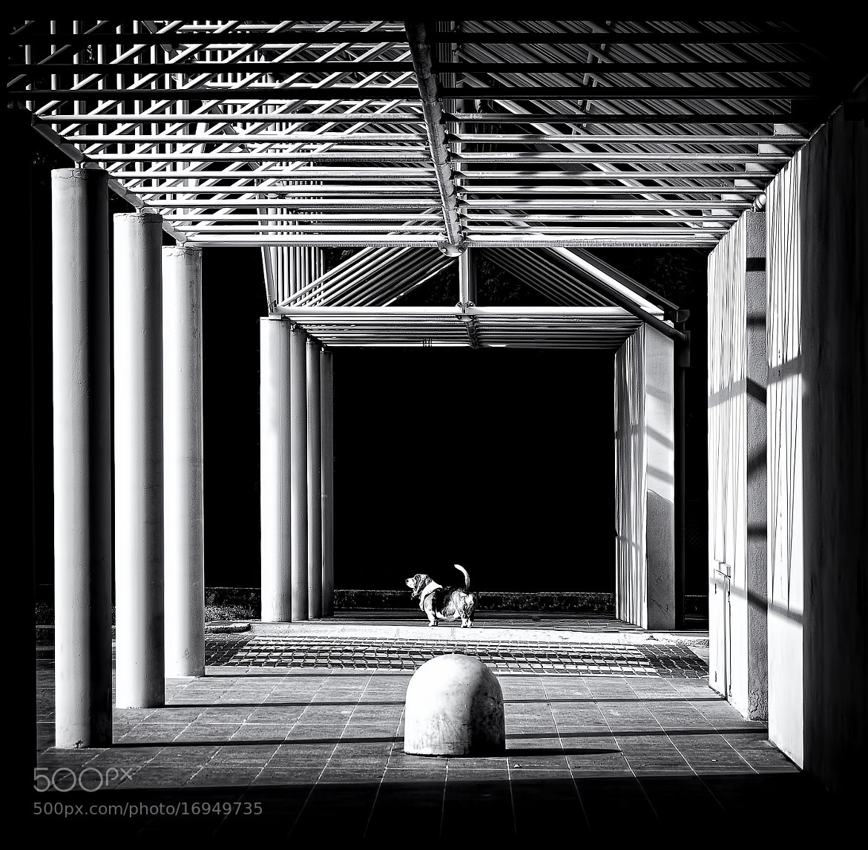 Photograph Sto al centro!  by Silena  Lambertini on 500px