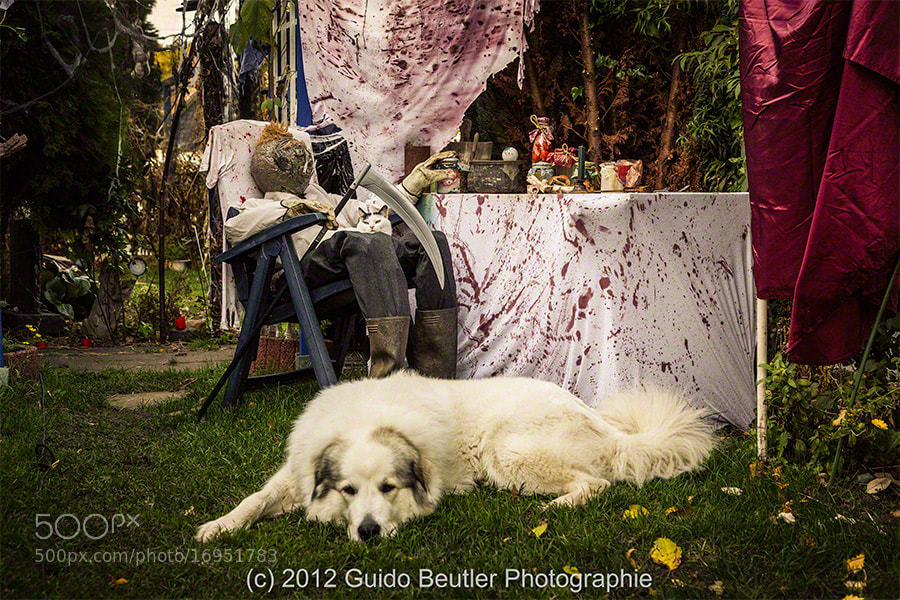 Photograph Samantha and Camilla's Halloween by Guido Beutler on 500px