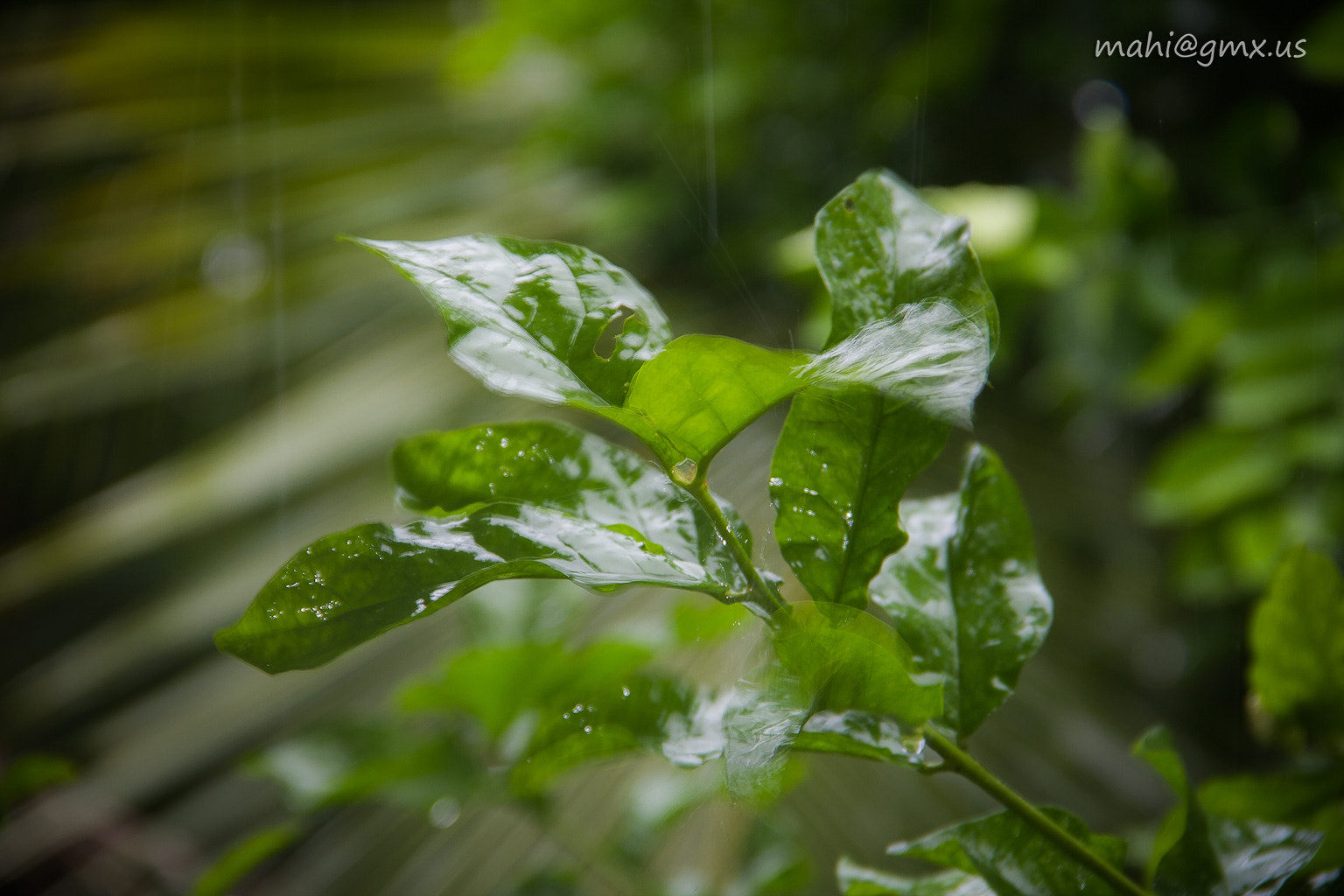 Photograph Plant on Rain by Mahinthan So on 500px