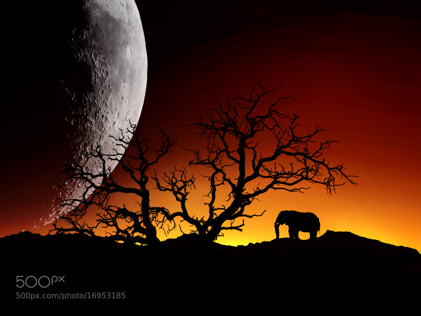 Photograph This planet by Rezvan Irani on 500px