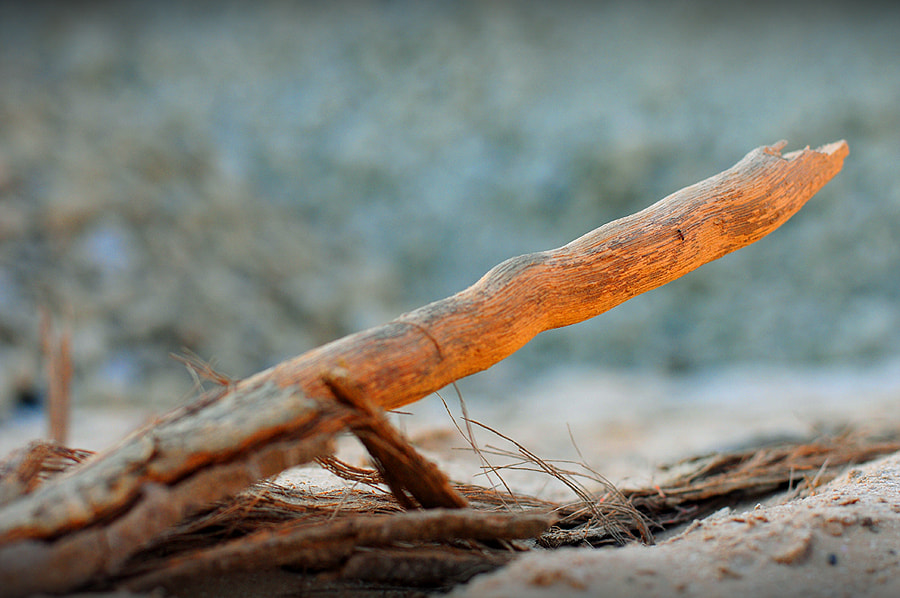 Photograph Wooden Twig by Naeem Hussain on 500px