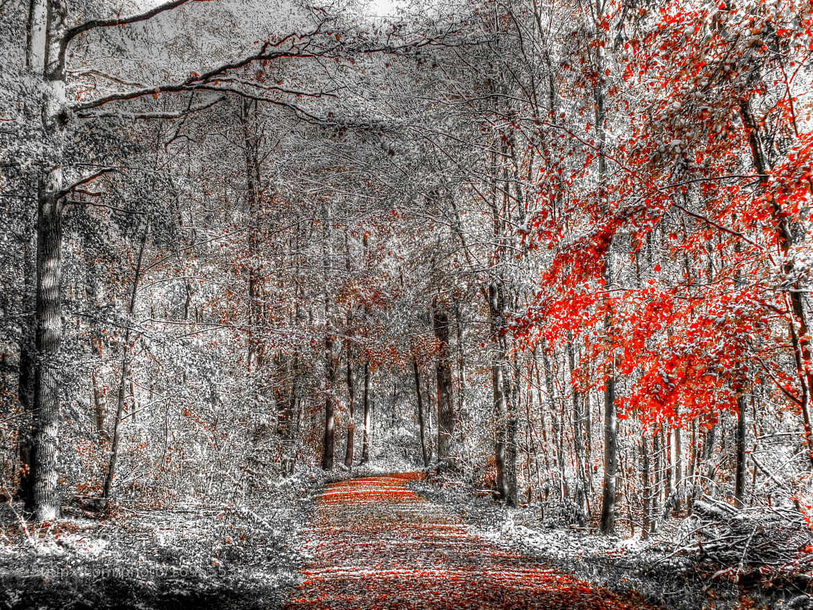 Photograph forest 2 by Alexes Mores on 500px
