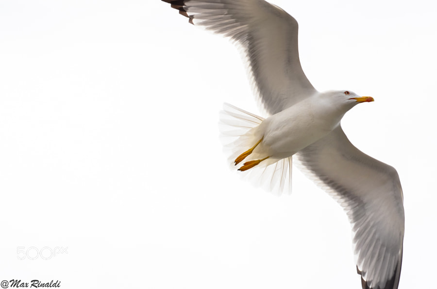 Photograph Freedom by Max Rinaldi on 500px