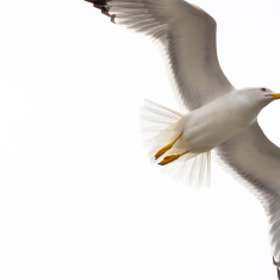 Freedom by Max Rinaldi (MaxRinaldi)) on 500px.com