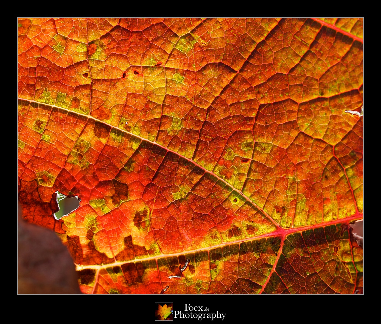 Photograph Leaf structure XXV by Christoph Rupprecht on 500px