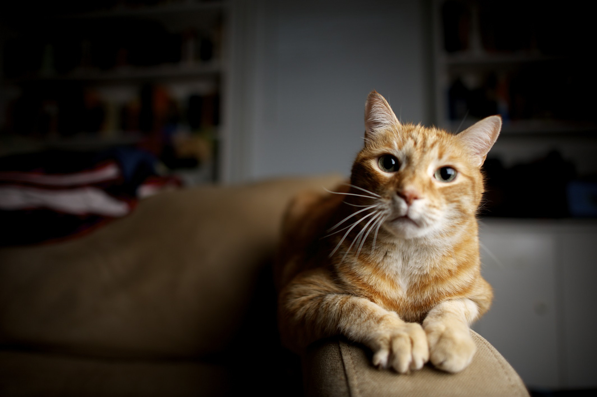 Photograph Late night cat. by John Richards on 500px