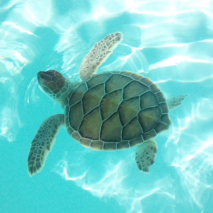 Green mexico turtle, Samsung GT-I8700