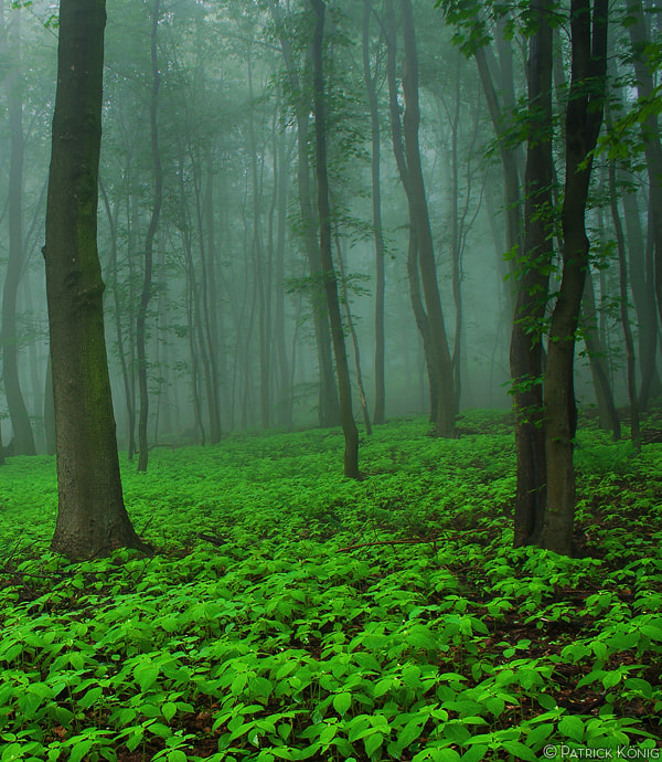 Photograph foggy forest by Patrick König on 500px