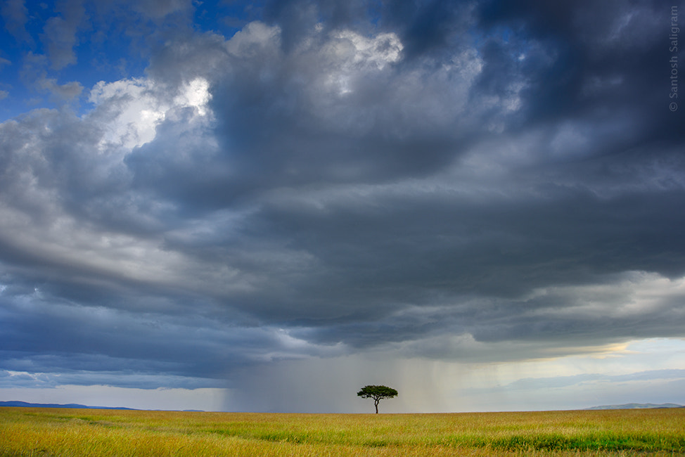 Photograph The Lone Tree by Santosh Saligram on 500px