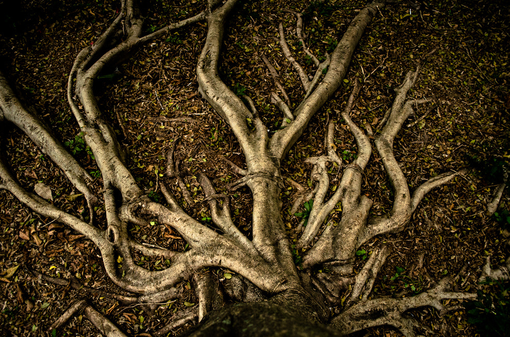 Photograph Root spread by Lougan Pedro on 500px