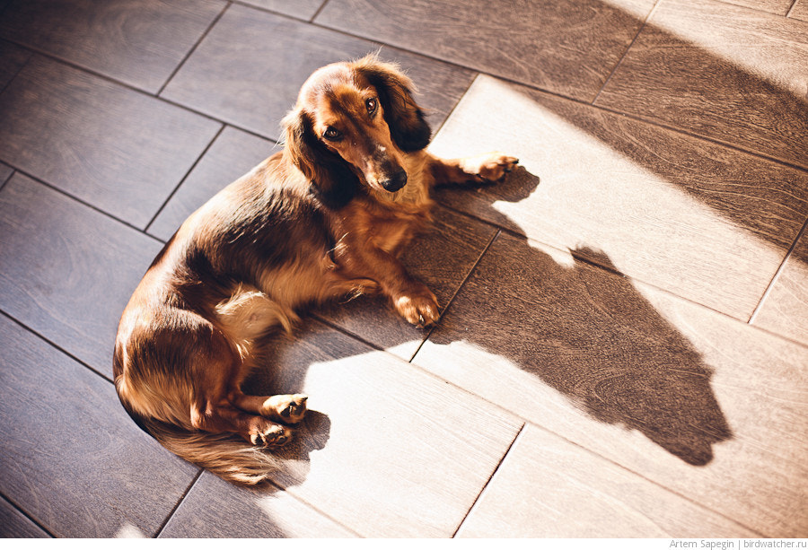 Photograph Sunbathing on a new kitchen by Artem Sapegin on 500px
