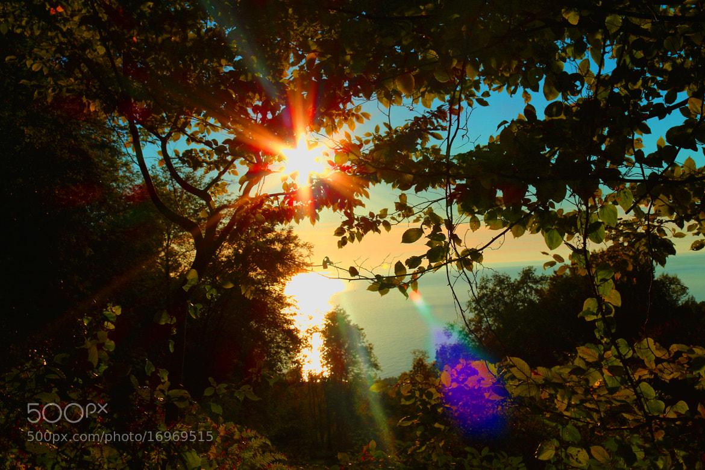Photograph autumn sun by lili Kogonia on 500px