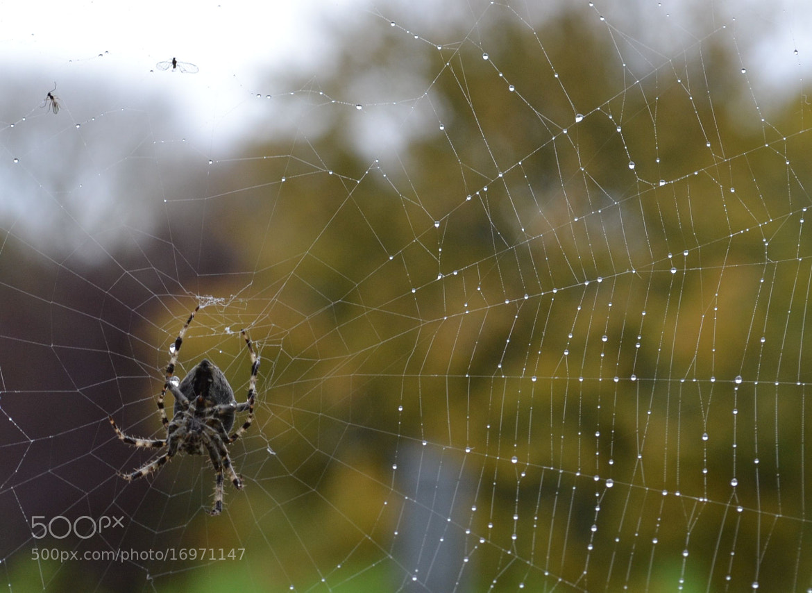 Photograph Spider by Alex Fleming on 500px