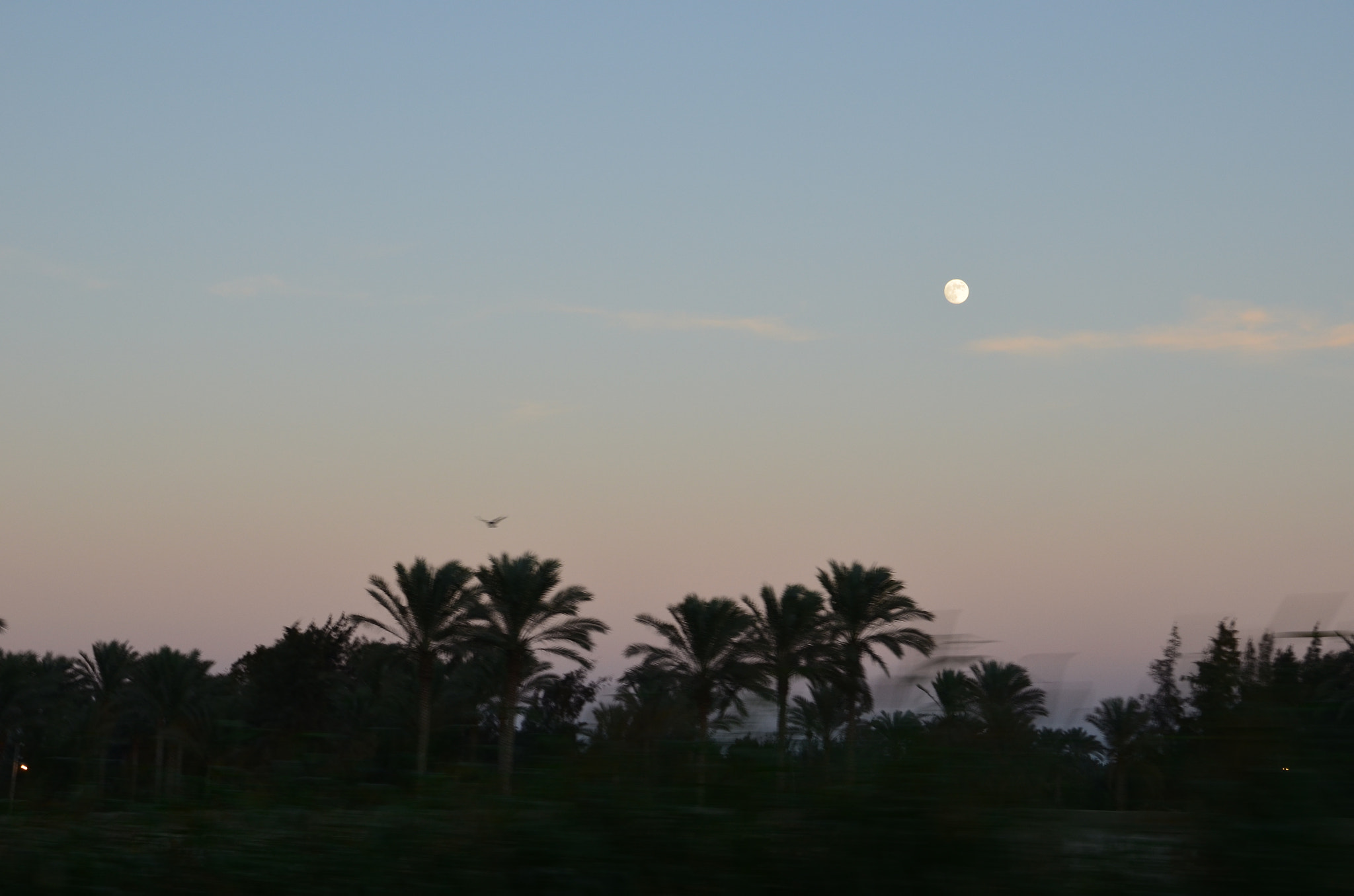 Photograph The Moon at Sunset by Zeyad Sakr on 500px