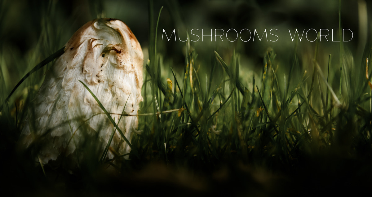 Photograph mushrooms world by Peter N. on 500px