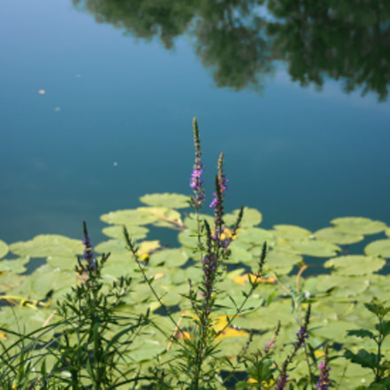 water lilies, Canon EOS 1000D, Canon EF 35-70mm f/3.5-4.5