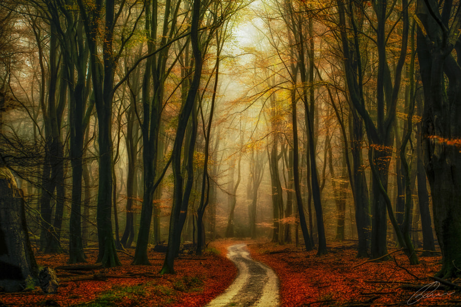 Golden leaf forest by Lars van de Goor