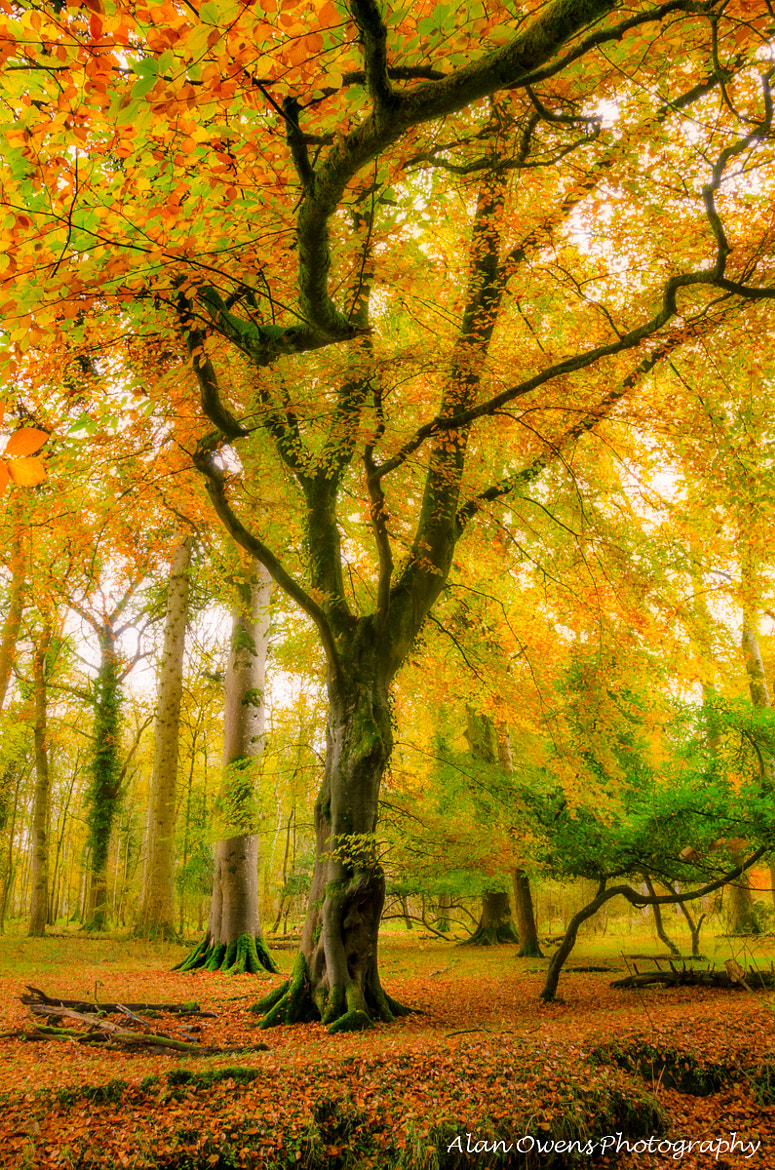 Photograph ~Autumn Forest~  by Alan Owens on 500px