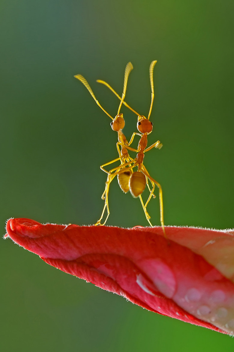 Photograph Dancing Ant by teguh santosa on 500px