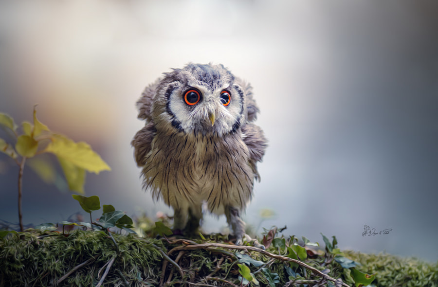 Gandalf, the Grey by Tanja Brandt on 500px.com