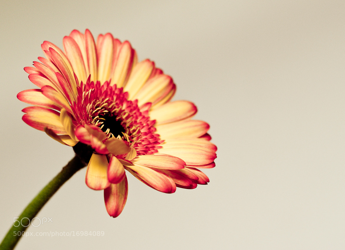 Photograph Flower by Sebastiaan  van Venetiën on 500px