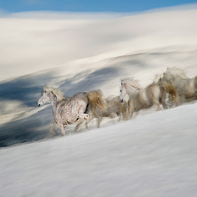 in winter by Milan Malovrh (elfot)) on 500px.com