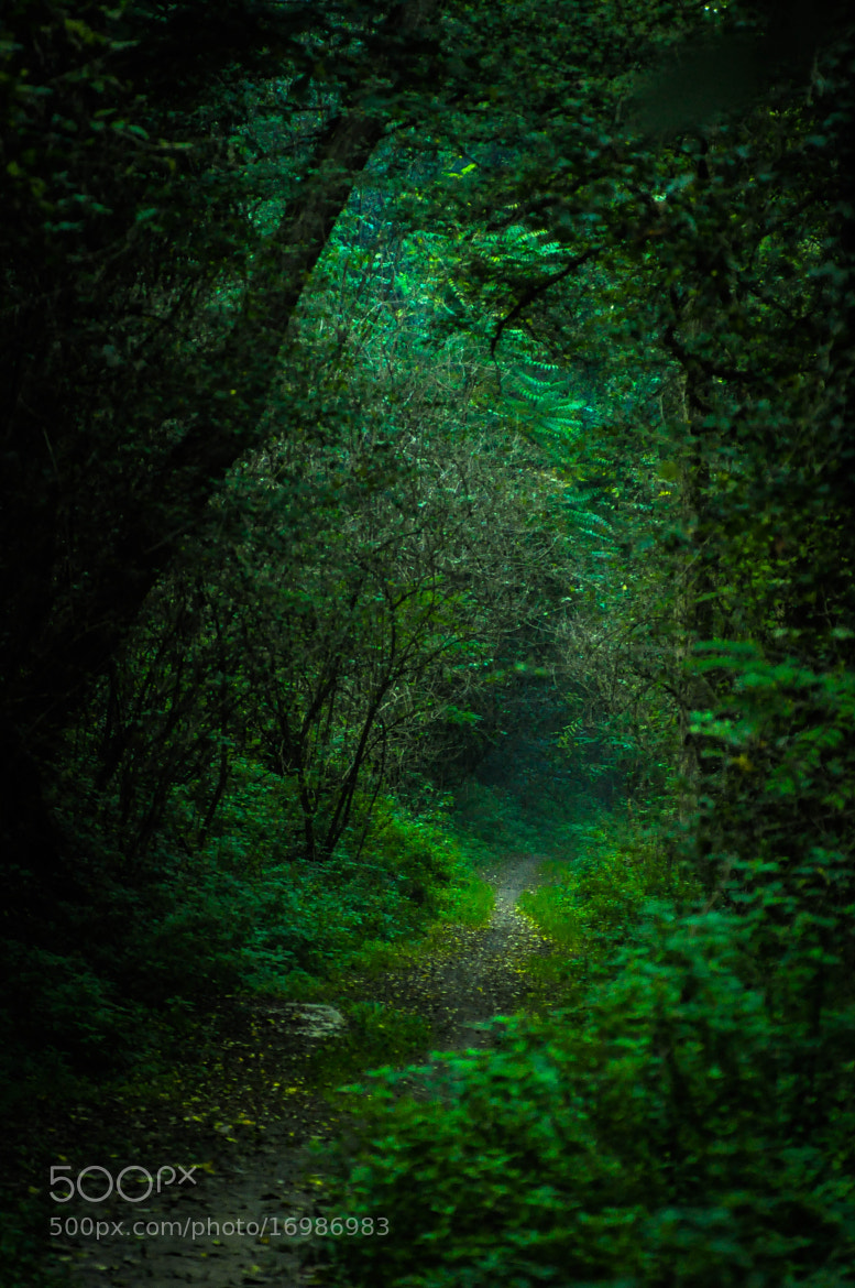 Photograph The green path by Michele Fornaciari on 500px